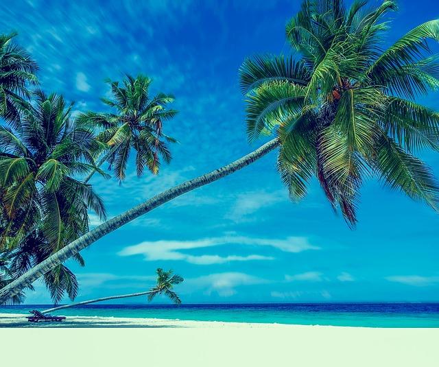palm-trees-1815272_640