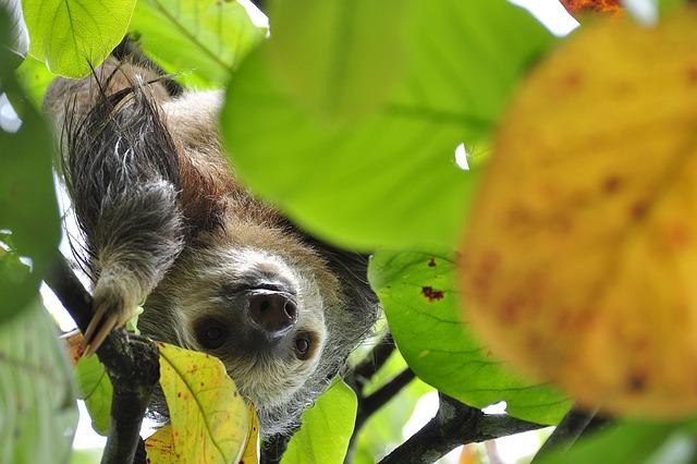 sloth-1448822_640